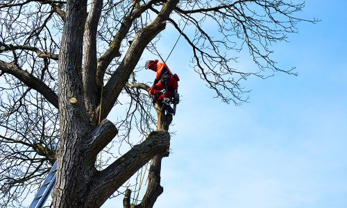 Baumschnitt6_gartengestaltung-klaus