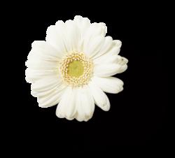 Blume 07