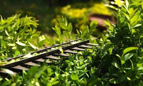 hedge-3393849_640